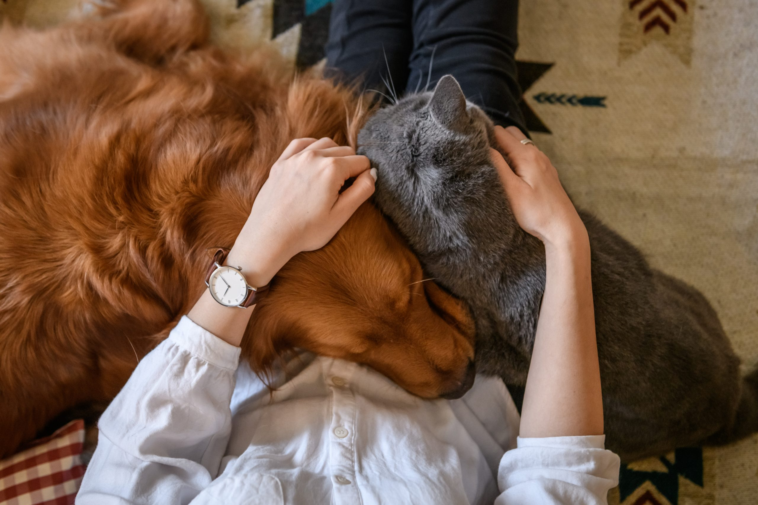 Pets day-to-day care plan